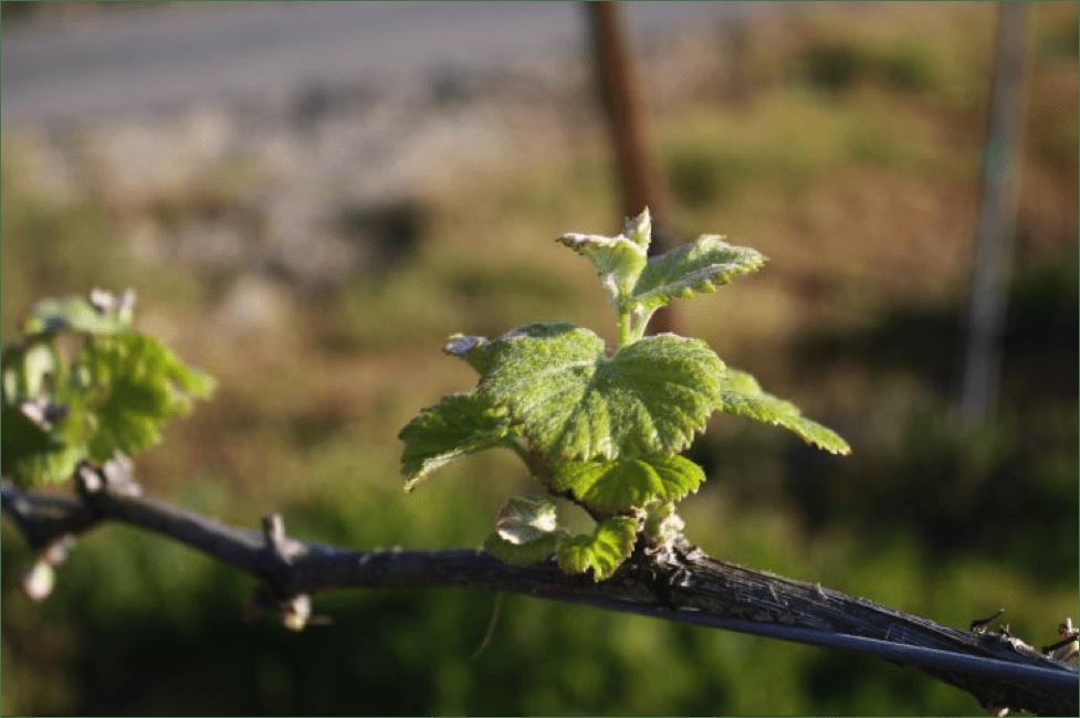 pruning-4